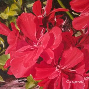 geraniums 10x10